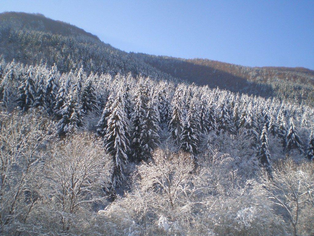 Sejur ski la Baisoara (12)