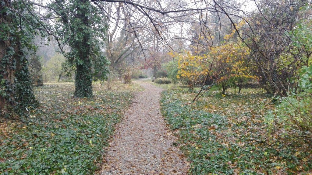parcul dendrologic Macea