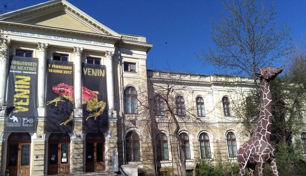 Muzeul Antipa, obiective turistice in Bucuresti (31)