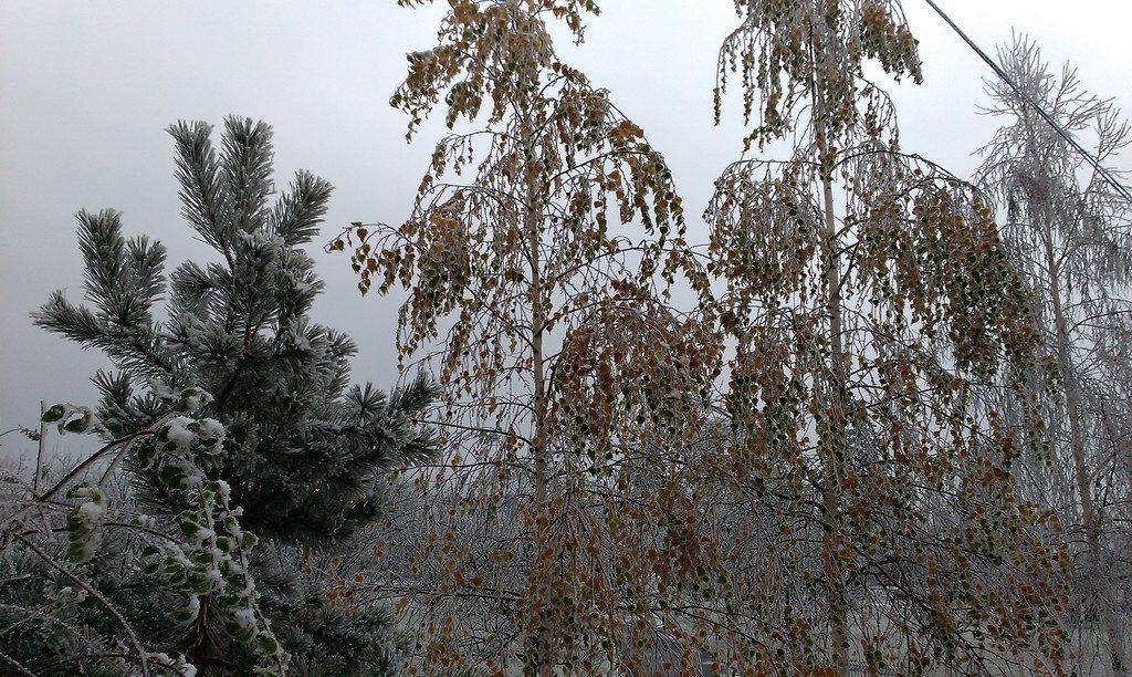Matei Basarab, Casa domneasca Brebu, obiective turistice Prahova, RomaniaMatei Basarab, Casa domneasca Brebu, obiective turistice Prahova, Romania
