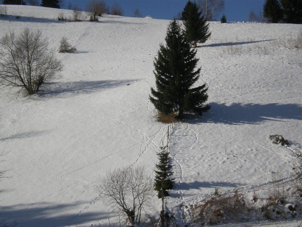 Craciun la Bran, partia Zanoaga, schi, ski, snowboard, telescaun
