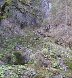 Pestera Poarta lui Ionele, obiective turistice in Muntii Apuseni, Transilvania Romania
