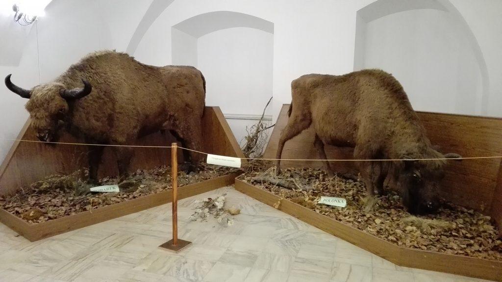 Infoturism, Deva , Hunedoara, Muzeul de arta, obiective turistice Romania