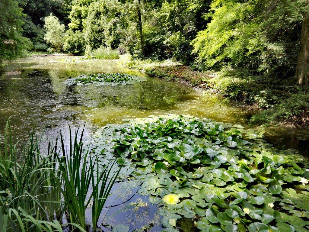 Gradina Botaica Simeria, Arboretum , OBIECTIVE TURISTICE TRANSILVANIA, ROMANIA