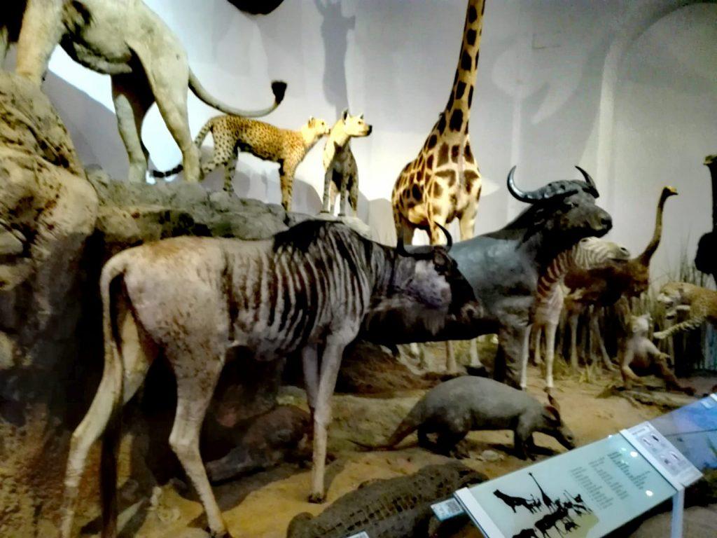 Muzeul Grigore Antipa, obiective turistice Bucuresti, Romania