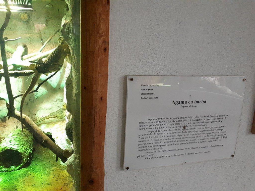 Gradina Zoologica, obiective turistice Pitesti, Arges, Romania, Padurea Trivale