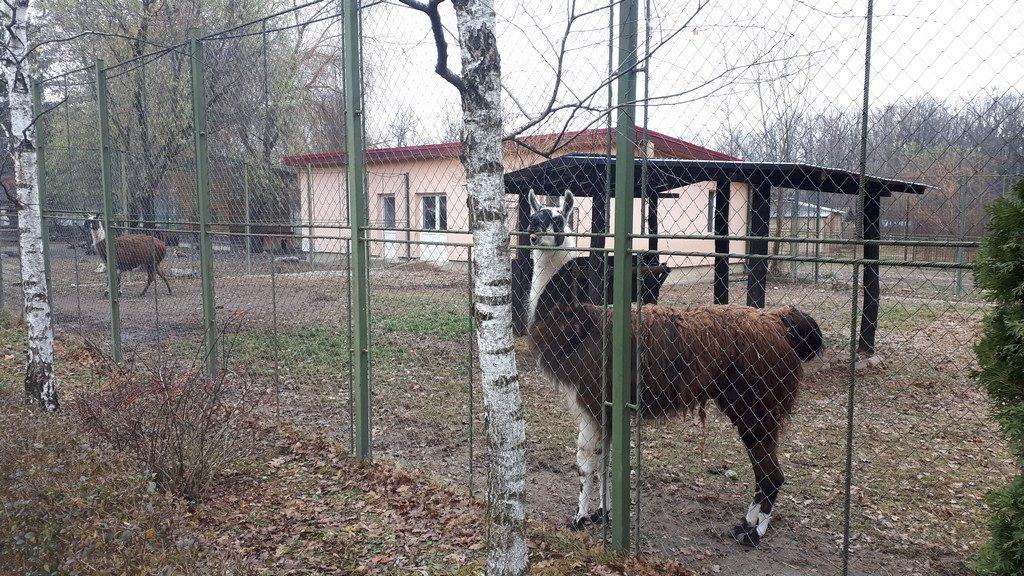ame,Gradina Zoologica, obiective turistice Pitesti, Arges, Romania, Padurea Trivale