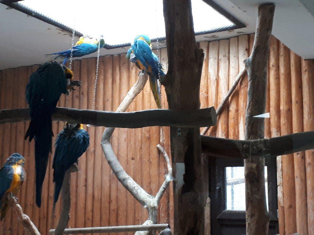 papagal ara, Gradina Zoologica, obiective turistice Pitesti, Arges, Romania, Padurea Trivale