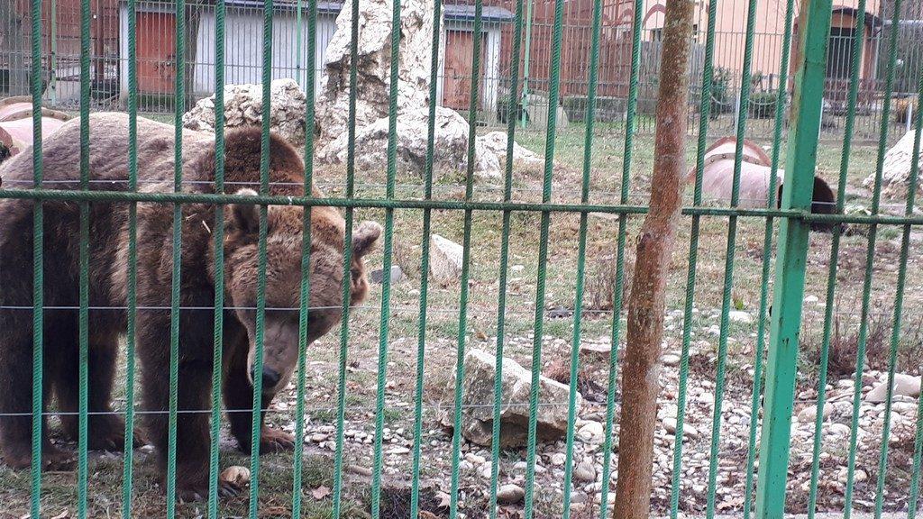 urs brun, obiective turistice Pitesti, Arges, Romania, Padurea Trivale