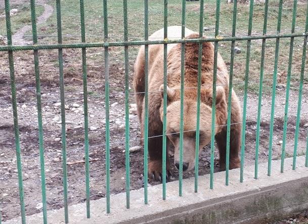 tigru, obiective turistice Pitesti, Arges, Romania, Padurea Trivale