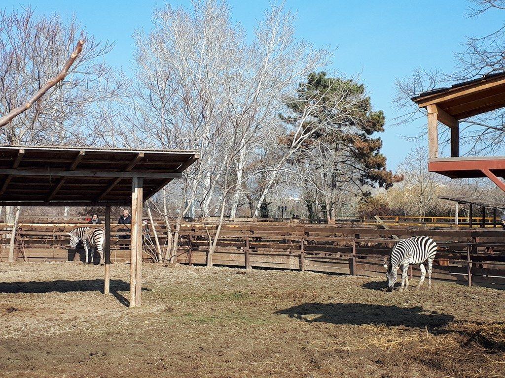 Delfinariu Constanta, microrezervatie, gradina zoologica, obiective turistice Romania, zebra, cal Przewalski, pelican, alpaca, gasca de Nil,