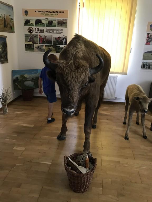 Rezervatia de zimbri, Vama Buzaului, obiective turistice Romania, Brasov