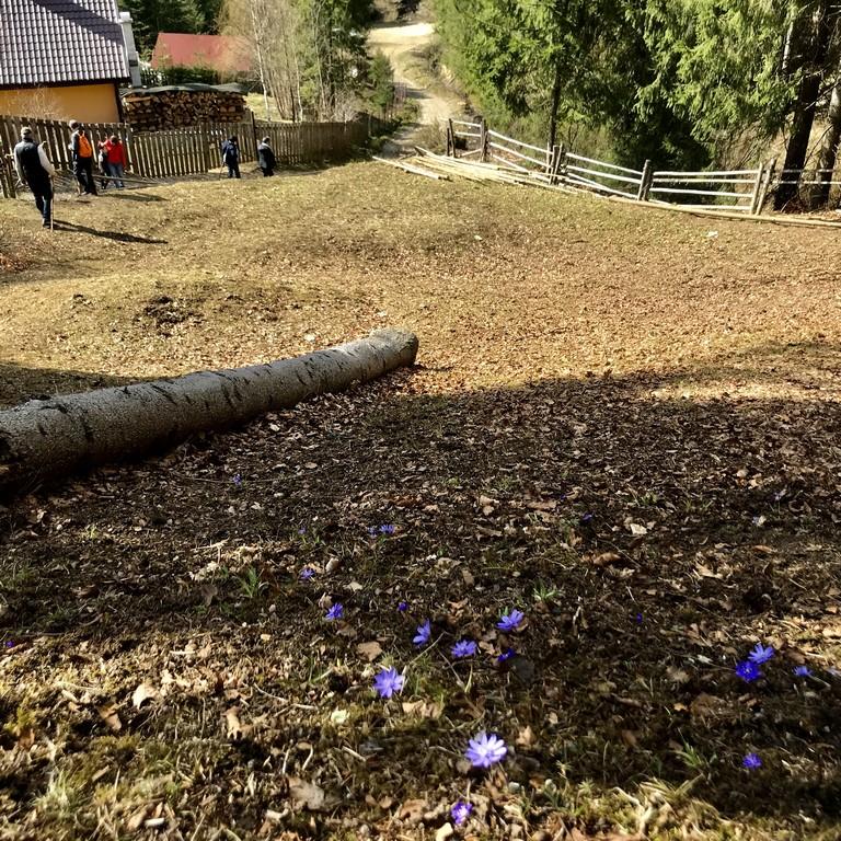 Cabana Piatra Singuratica, Muntii Hasmasu Mare, traseu munte, Romania, Transilvania, Harghita